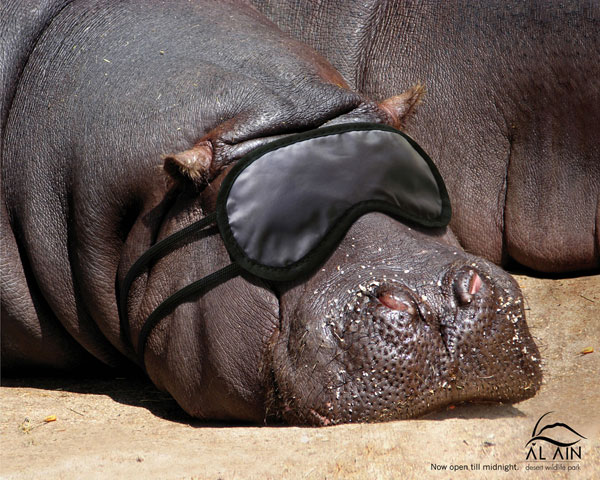 Hippo Sleeping