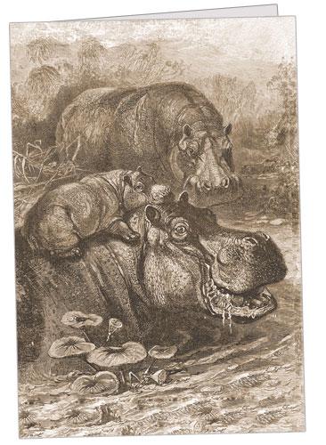 Hippopotami Family Note Card