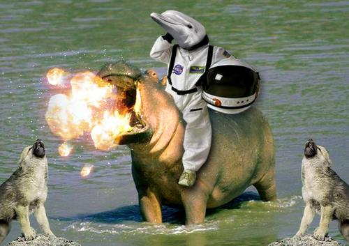 A Dolphin Riding a Hippo