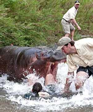 Nico-de-Bruyn-with-hippo