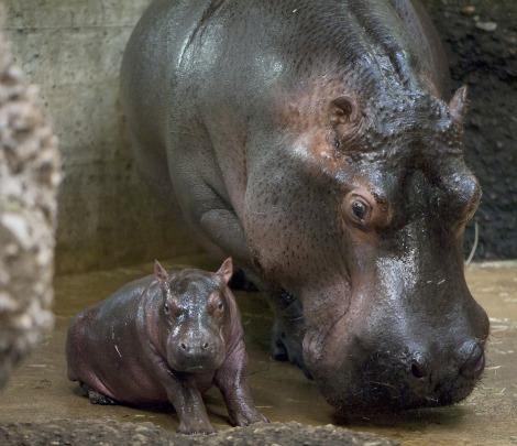 New Baby at Basel Zoo